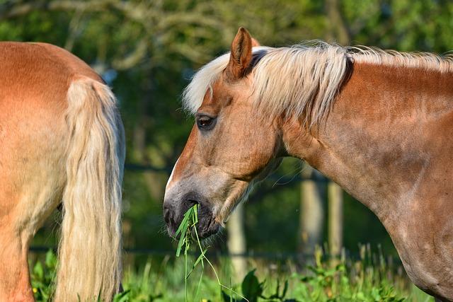 Bien nourrir mon cheval