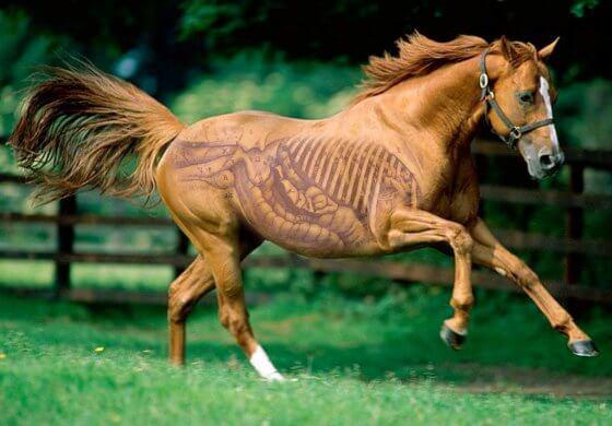 appareil digestif du cheval