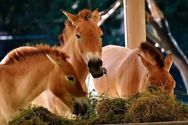 La digestion chez les chevaux