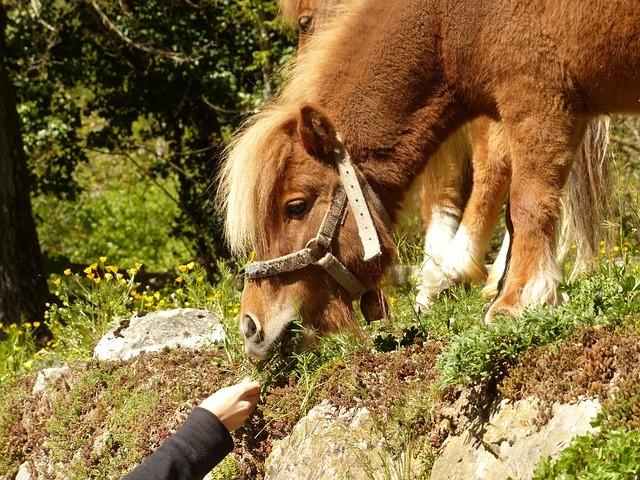 digestion et troubles de l'appareil digestif chez les chevaux