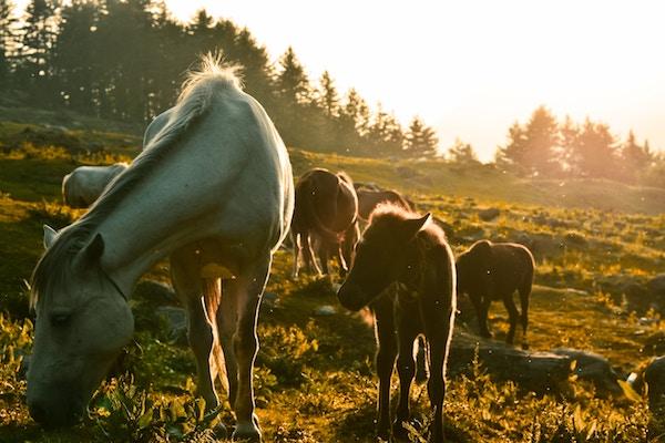flore microbienne du cheval
